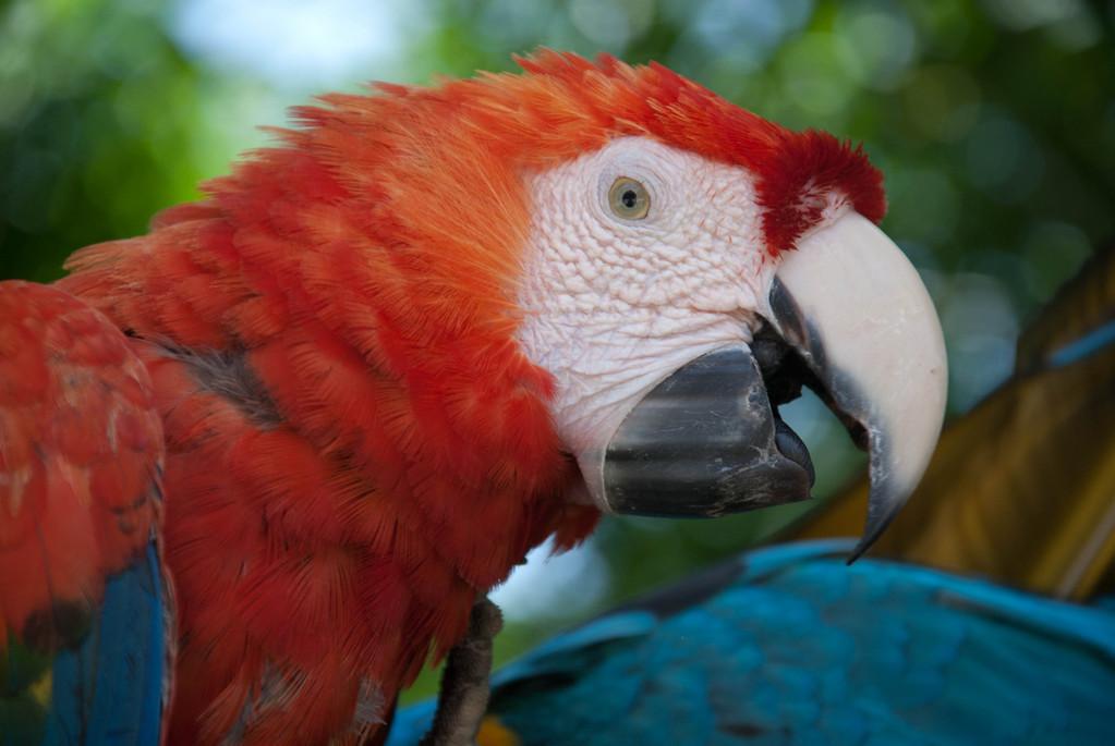 Polly want a cracker?
