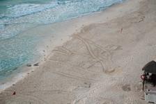 Turtle tracks?