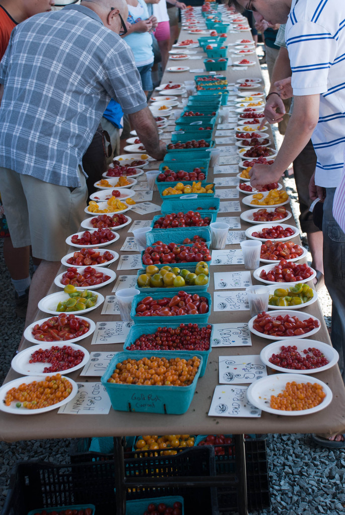 Tomato tasting (second table)