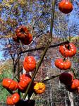 Pumpkins on a stick?
