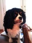 Ralphie watching my cinnamon bun