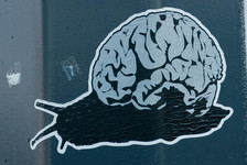 Brain slug