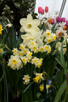 Smith College Bulb Show 2011