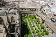 Orange grove in the cathedral from La Giralda