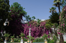 Bouganvilla at Casa de Pilatos