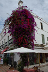 Flowers in Marbella