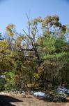Smashed tree