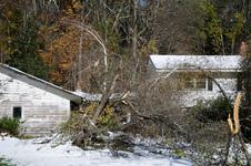 Smashed trees