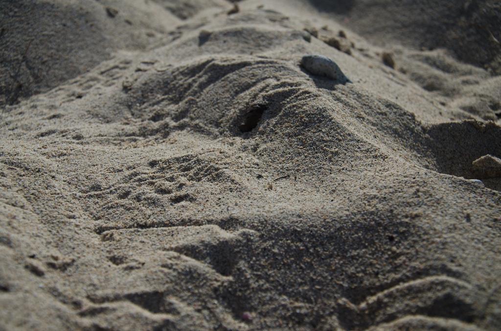 Crab tracks