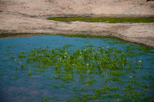 Pools on Enchanted Rock
