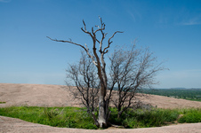 Tree on Enchanted Rock