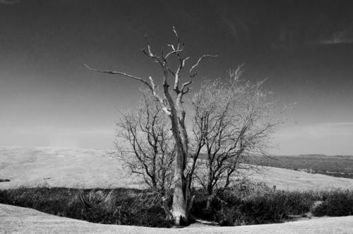 Tree on Enchanted Rock