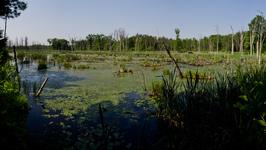 Rail trail pond