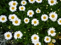 Random summer flowers