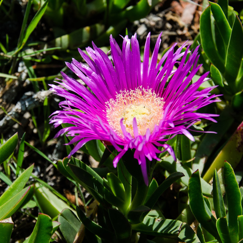 Flowers at Land's End