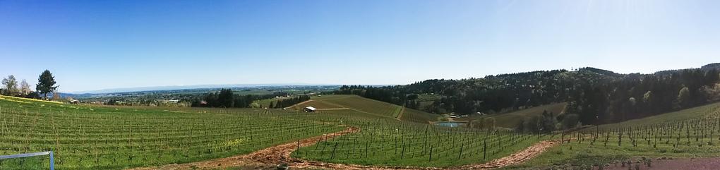 Winderlea vineyards