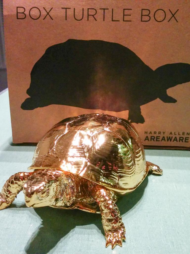 Box turtle box and box turtle box box