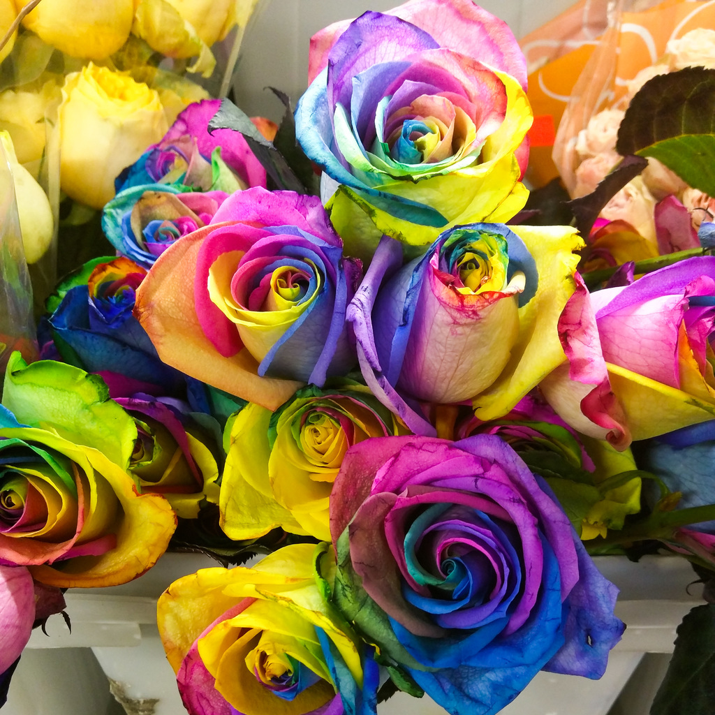 Wow. Roses.