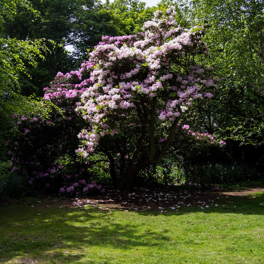 Sheringham Park