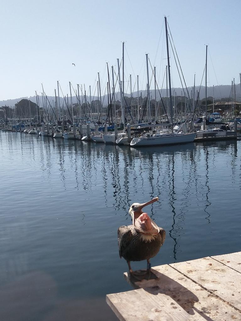 Pelican WTF!?