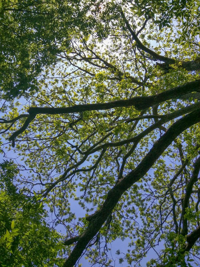 Pecan overhead