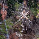 Biiiig spider