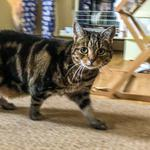 Mitzy on the move