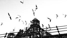 Gulls, above